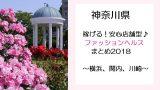 稼げる!神奈川県のファッションヘルスまとめ2018~横浜、関内、川崎~